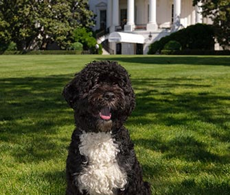 Bo Obama sits in front of the White House.