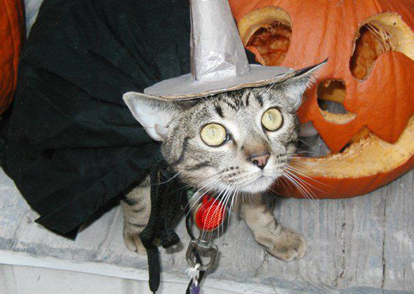 Cat as Witch