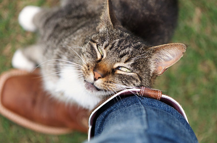 Cat rubbing face on human leg