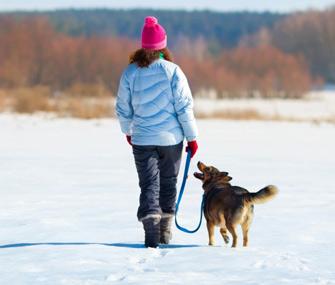 Dog on Winter Walk