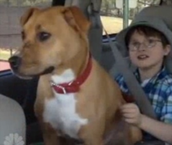 Xena the Warrior Puppy immediately bonded with 8-year-old Jonny Hickey.