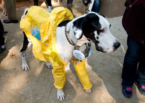 Dog Halloween Parade Breaking Bad