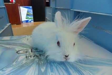 Einstein the bunny