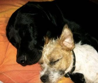 Eddie, a Lab, and Milo are best buddies.
