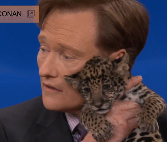 Conan O'Brien with a jaguar cub