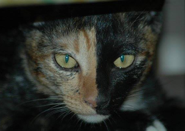 Chimera Cat Dark Moon