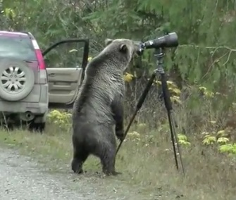 A grizzly bear investigated a wildlife photographer's equipment in British Columbia earlier this month.