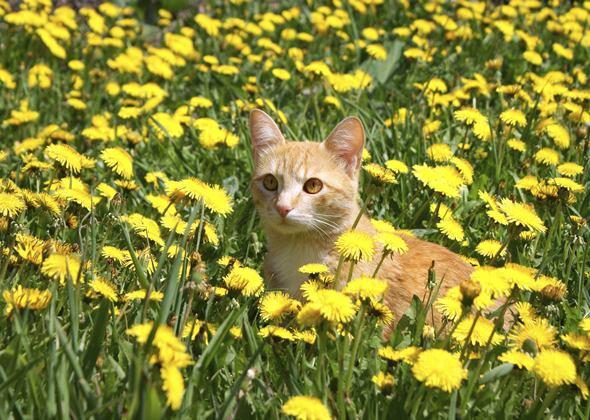 cat in flowers