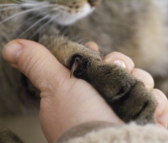 Cat's paw on human hand