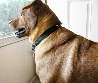 Dog standing at glass door