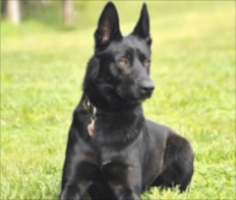 K9 Officer Lucas came to the rescue of his partner during an ambush.