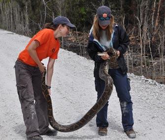 Christina Romagosa with python