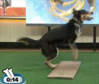 Geronimo, a 4-year-old rescue dog, broke his own double Dutch record.