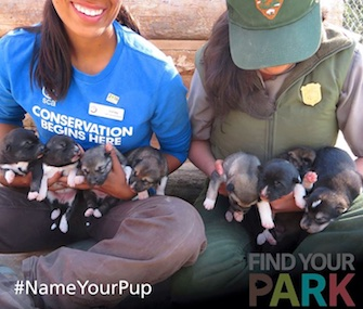 Denali National Park revealed the park-inspired names of its eight new sled dog puppies.