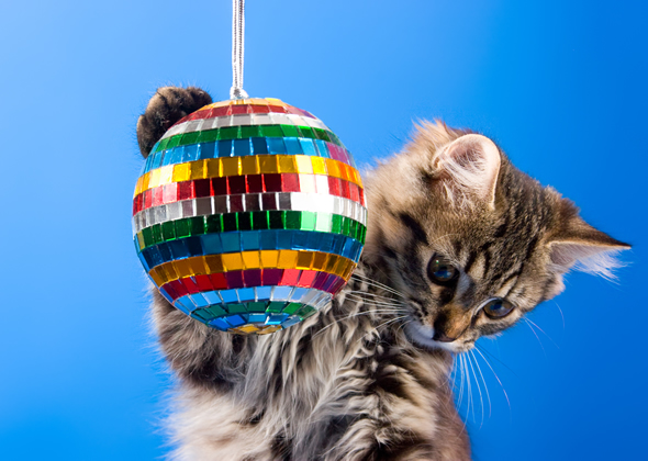 kitten disco ball