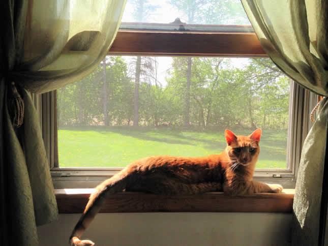 cute cat in window