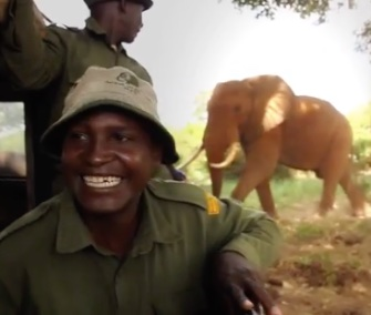 Joseph Sauni, a longtime keeper with the David Sheldrick Wildlife Trust in Kenya, was thrilled to see 26-year-old ex-orphan Ndume this month.