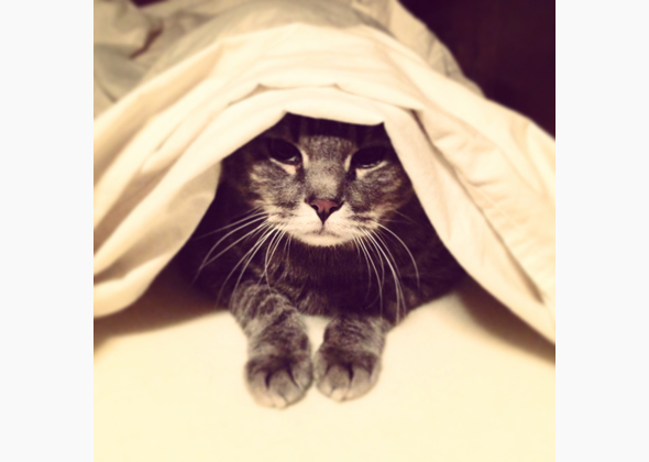 Dante the cat under the covers