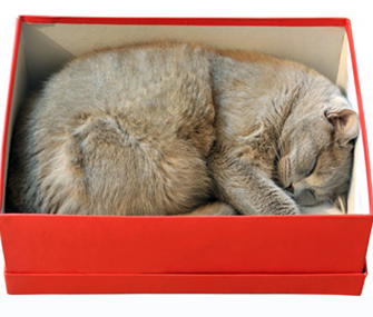 Cat sleeping in a box