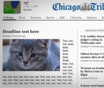 A homeless kitty became a star after his picture mistakenly appeared on the Tribune's homepage on Tuesday.