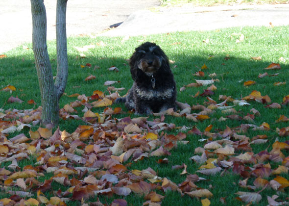 Dog sits under a tree