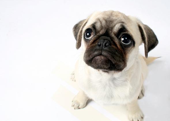 Slideshow: 8 Most Wrinkled Dog Breeds