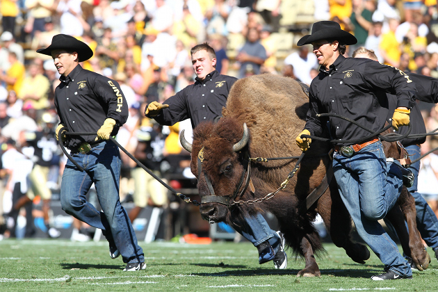 Ralphie, University of Colorado