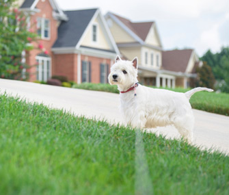 House Hunting With Pets