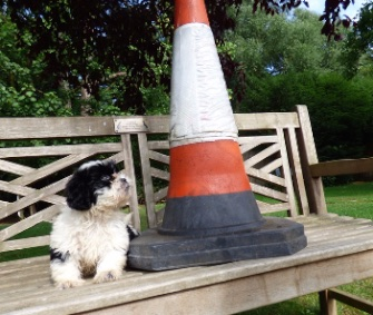 A young Shih Tzu puppy was named Connie after she was found under a traffic cone in London.