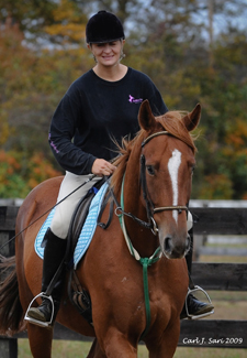 Saintly Sir Horse