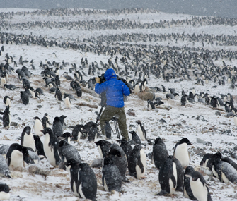Cameraman with Adelie Penguins