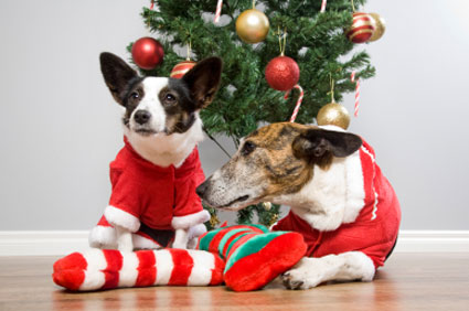 Dogs with Christmas gifts
