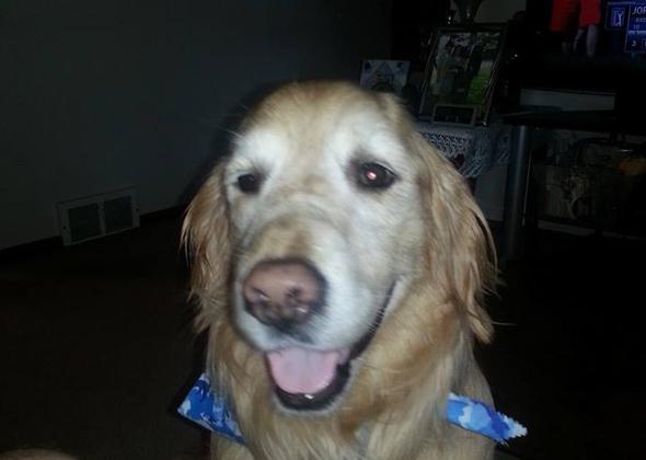 GR service dog.