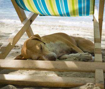 Dog-sleeping-under-beach-chair-Thinkstock-159145256-335lc061713 - Lazy Sunday - Anonymous Diary Blog
