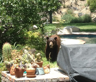 Meatball-loving bear
