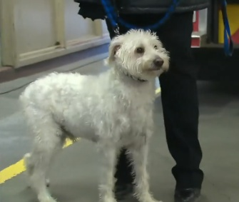 All cleaned up, Benny visited his rescuers at a Toronto fire station on Wednesday.