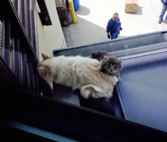 A mama cat and her kittens were rescued from a metal rooftop in Colorado.