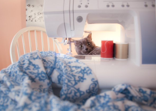Things in the Home That Scare Pets Sewing Machine