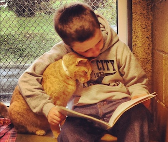 A boy reads to one of the cats at the Animal Rescue League of Berks County.