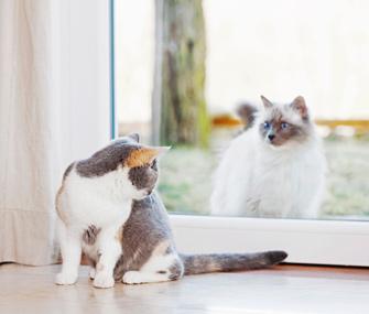 Indoor cat looking at outdoor cat through sliding glass door