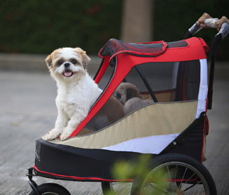Dogs in a stroller