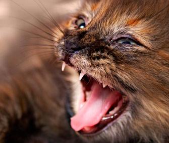 Aggressive kitten
