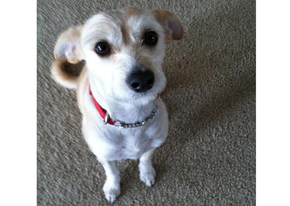Vet.'s Hosp. service dog