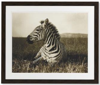 William Sonoma Zebra Print