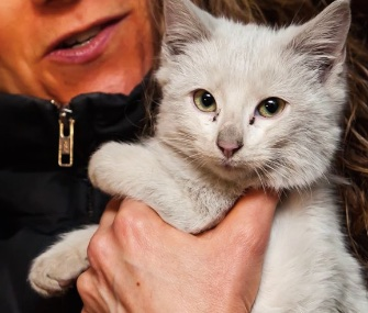 Miracle the kitten was rescued in Manhattan from the engine compartment where she'd stowed away for 30 miles.