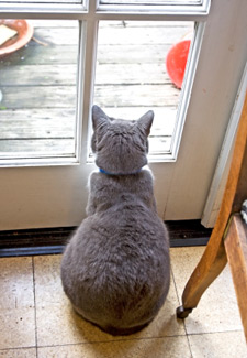 Cat looking at door