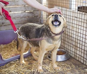 Petting a dog at a shelter