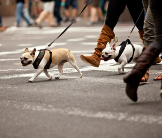 City Dogs Crossing Street
