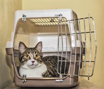 Cat lying in crate