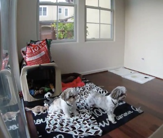 Gus and Gizmo were startled awake by their first earthquake in San Francisco.